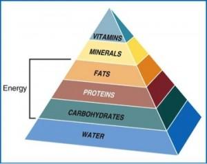 Nutrition best majors for jobs
