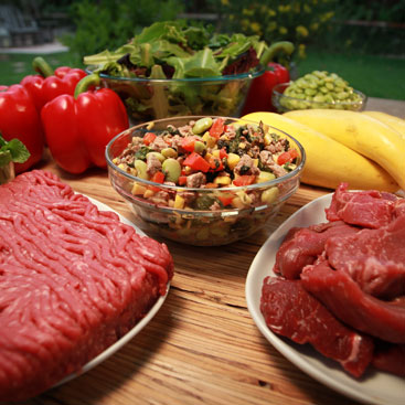 Raw Food Diet Scientific Research Dogs