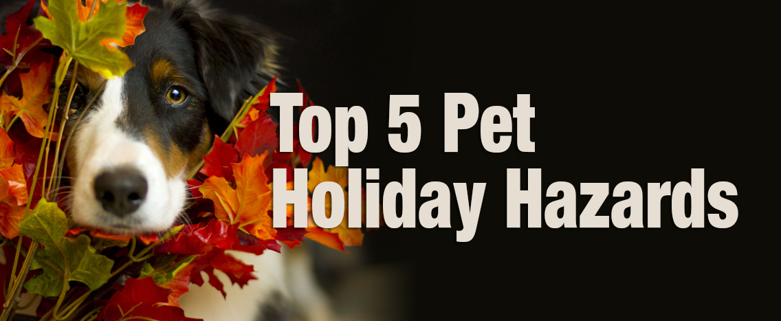 top5holidayhazards_blog