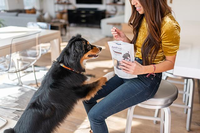 dog getting treats