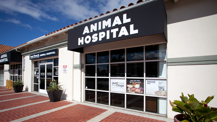 vet care for animals