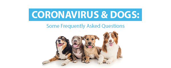 coronavirus and dogs facts you need to know