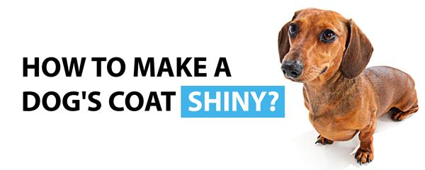How to make a dog's coat shiny blog post