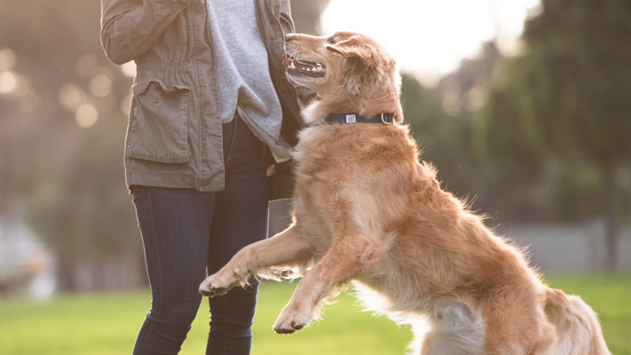 How to make a dog's coat shine