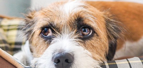Understanding Anxiety in Dogs