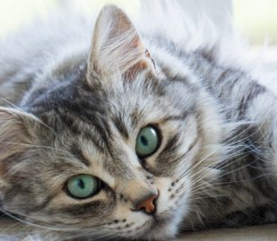 Cats Aren't Selfish, They're Just Self-Sufficient
