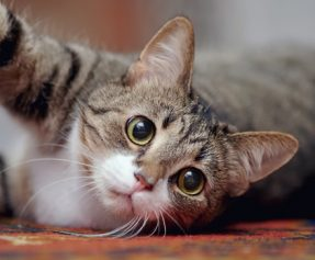 Top Health Concerns For Cats