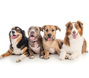 Coronavirus and Dogs: Some Frequently Asked Questions