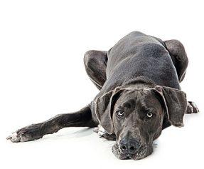 Do Pets Get Depressed?