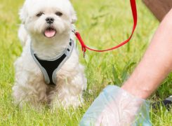 Dog Diarrhea: What Does It Mean?