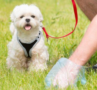 Dog Diarrhea: What Does It Mean?