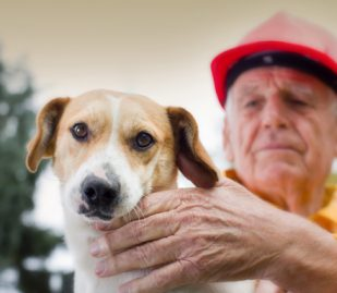 Natural Disaster Preparedness and Your Pets