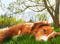 Heat Exhaustion: Signs and What To Do