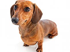 How to Make a Dog's Coat Shiny?