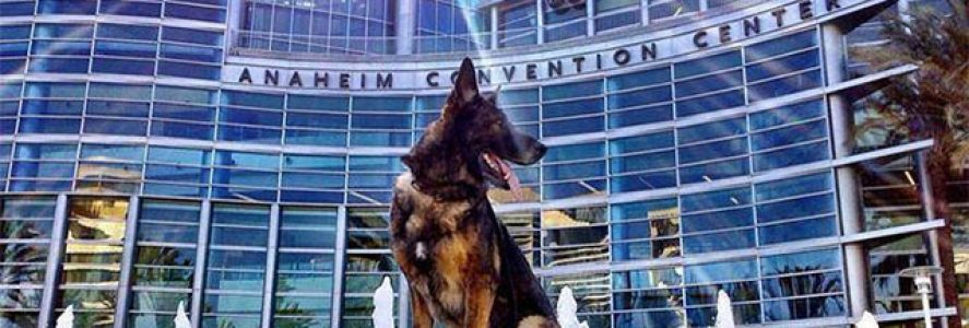 JFFD Custom Diet helps Bruno the Hero Police Dog in His Recovery