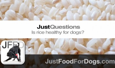 Is Rice Bad For Dogs?