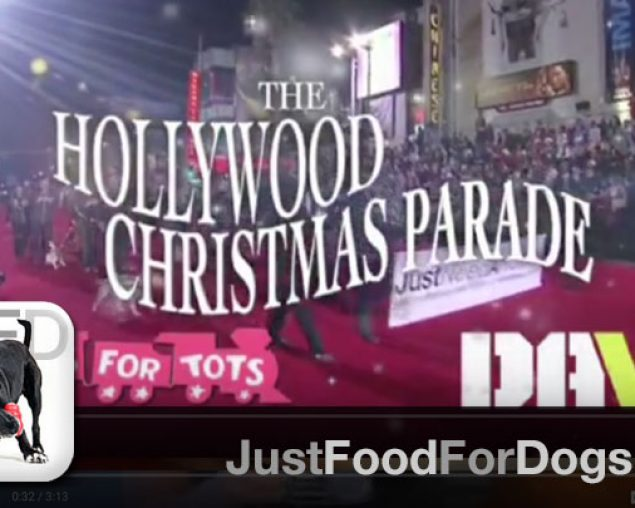 Rescue Dogs in Hollywood Christmas Parade 2013
