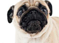How to Handle Dogs that are Picky Eaters (Finicky Dogs)