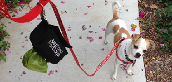 Everything you ever wanted to know about cleaning up your dog's poop!