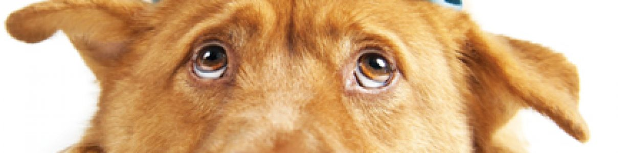 10 Years Later – The Pet Food Industry a Decade after the Melamine Recall of 2007