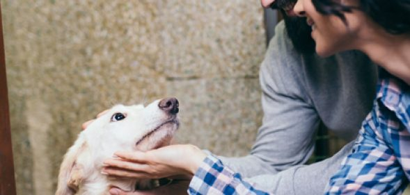 How to Help Your Shelters This Holiday Season