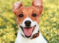 How To Prepare Your Pets For Spring