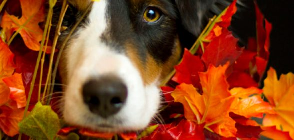 Top 5 Pet Holiday Hazards