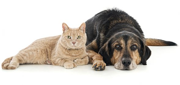 JustFoodForDogs Recommends The Best Medical Insurance For Cats and Dogs: Trupanion.