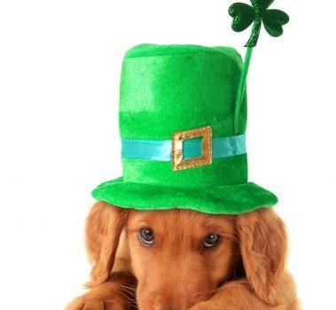 A True Irish Lassie