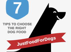 7 Tips for Selecting Exactly the Right Food for Your Dog