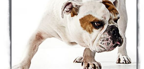 Has the food you've been feeding your dog ever been tested?
