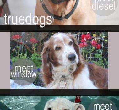 TRUE DOGS / 02